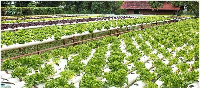 Watson Decision Platform for Agriculture