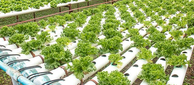 big data solution farming agriculture