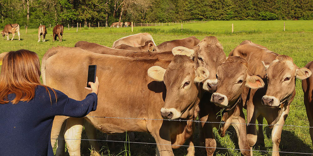 Introduction Cattle Breed Identification App